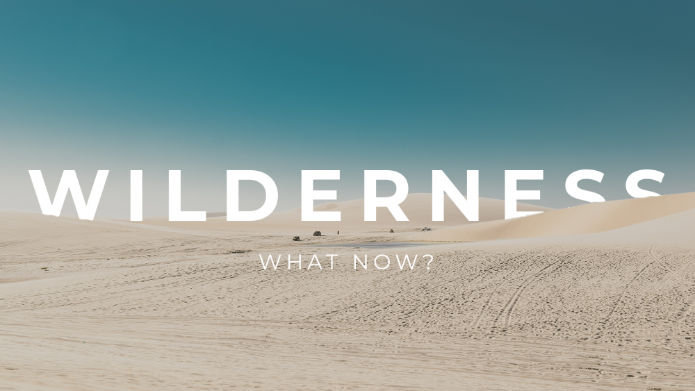 Wilderness: What Now?